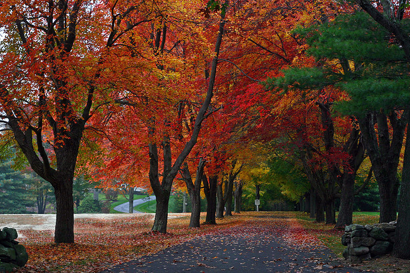 800px-New_England_driveway