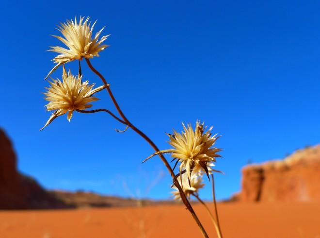 desert-82403_1280
