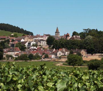 Vineyard Vines Grapes France Burgundy Village