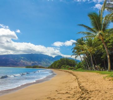 Beach Kihei Maui Hawaii Landscape Sand Palms
