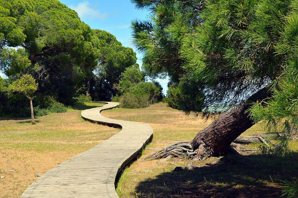 Pasarela_parte_del_paisajismo_en_parque_Doñana
