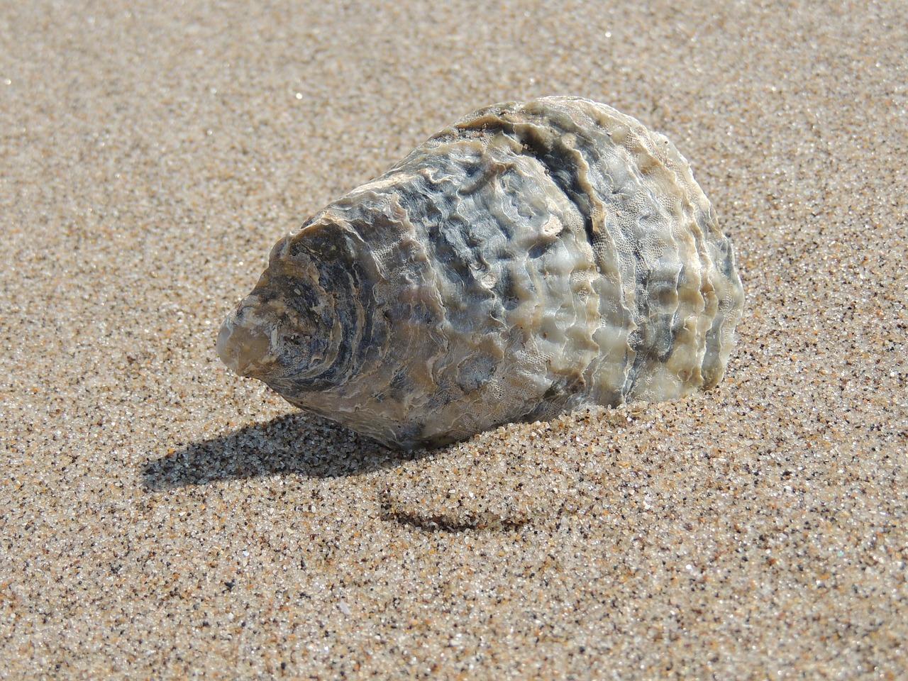 seashell-140746_1280